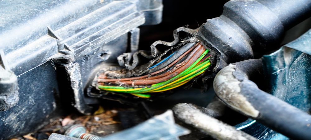Mice Chewing wires